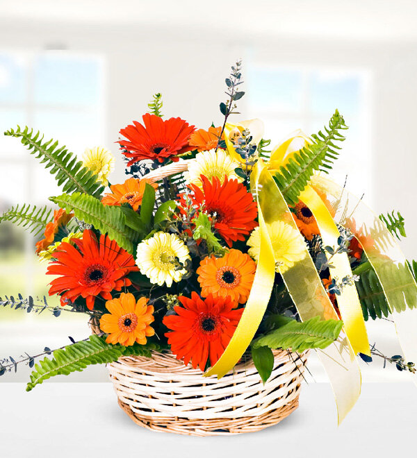 Mixed Gerberas in Basket