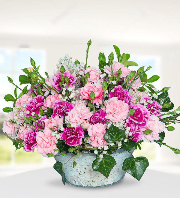 Colorful Carnations in Vase